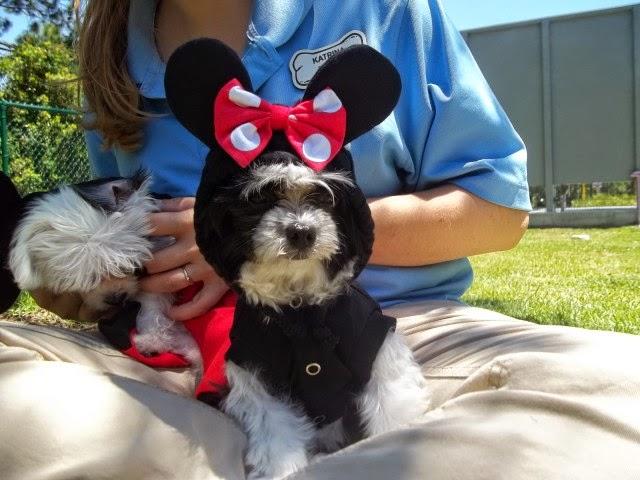Animais de estimação na Disney – Onde Ficar