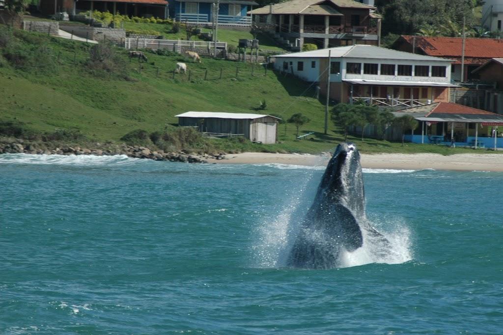 Baleia bem de pertinho em Santa Catarina