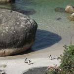Pinguin em Boluders - Cidade do Cabo