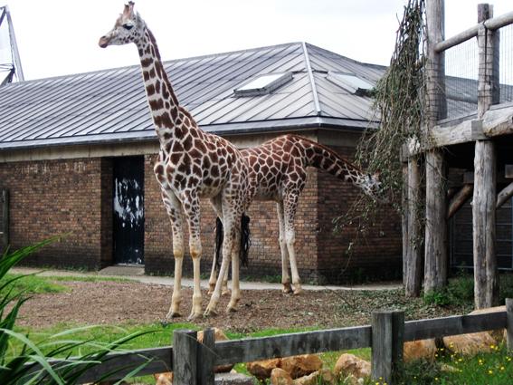 Os melhores zoo das Europa