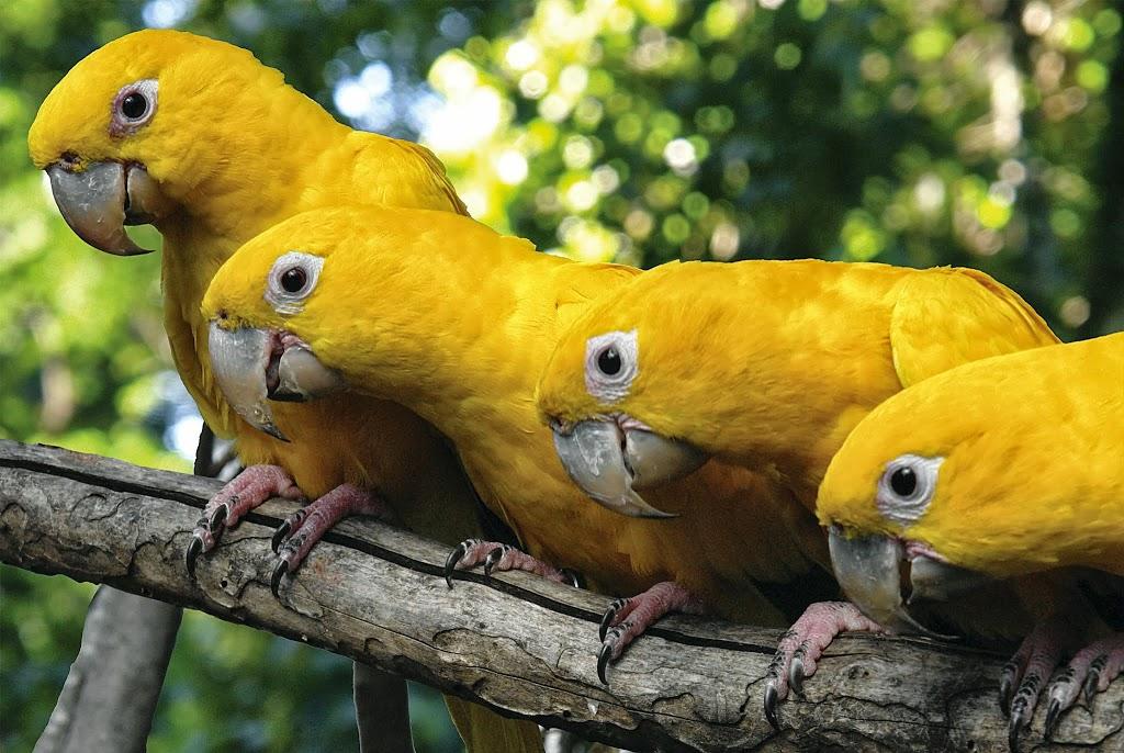 Foz do Iguaçu com Crianças: Parque das Aves