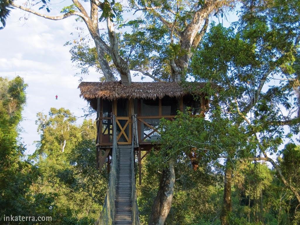 4 Hotéis que ficam nas árvores