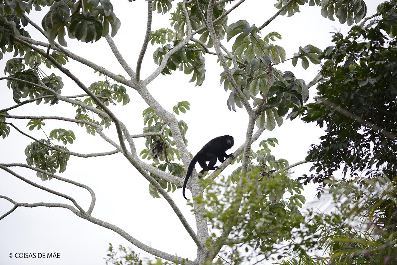 10 animais que vimos no Pantanal