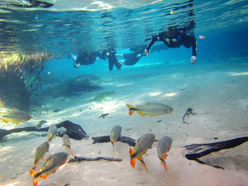 Flutuação em Bonito – um dos melhores mergulhos que já fiz