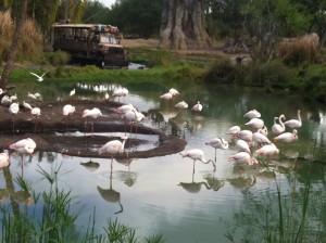 Disney com Crianças Kilimanjaro Safaris Animal Kingdom