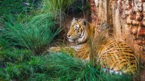 Disney com crianças Maharajah Jungle Trek Animal Kingdom