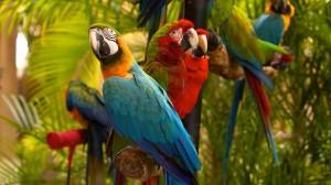 Miami com crianças - Jungle Island Miami
