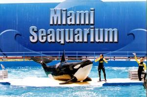 Miami com crianças - Miami Seaquarium