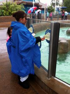 Choveu durante a nossa visita ao Sea World, mas aproveitamos do mesmo jeito!