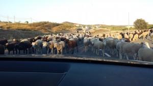 Ruta de los Pueblos Blancos_rebanho_Mães e pais que viajam com filhos