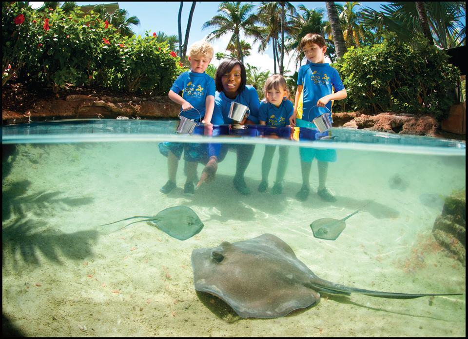 Atlantis Resort Bahamas com crianças_Treinador por um dia Arraias