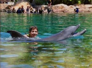 Golfinhos - Discovery