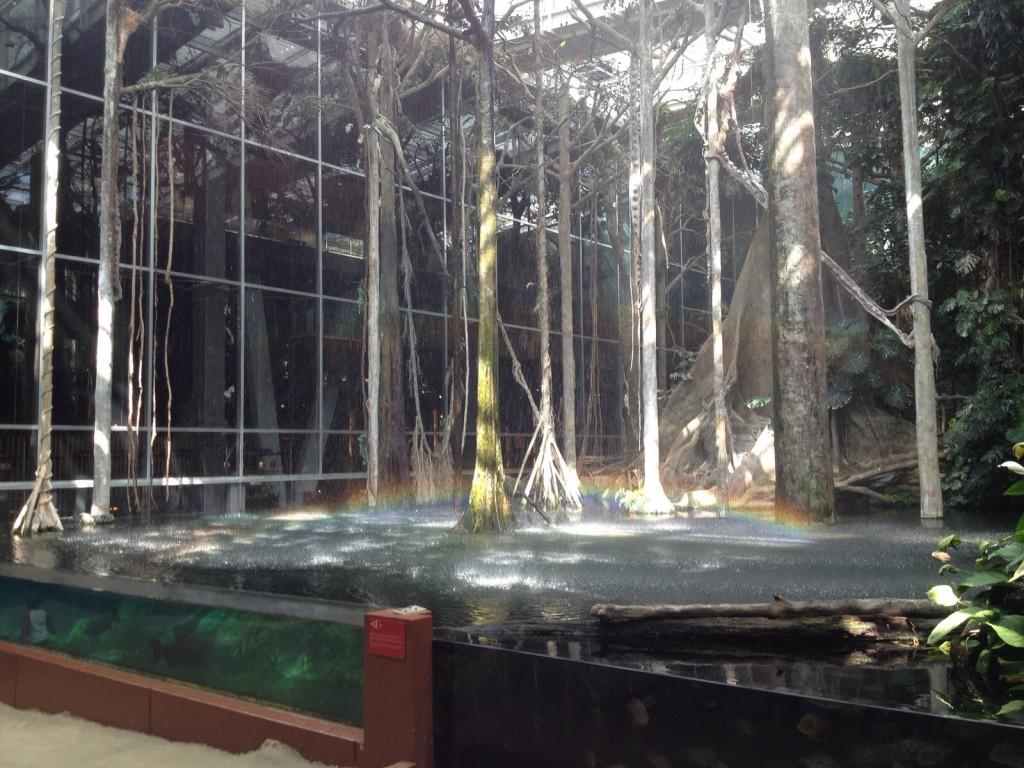 Bosque Inundado: hora da chuva