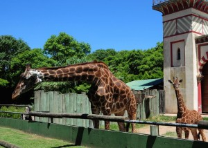 zoo_de_buenos_Aires_com_crianças