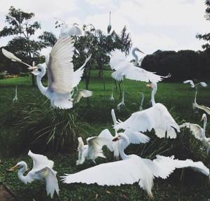 Viajo com Filhos_Belém do Pará com Crianças_Parque Mangal das Garças_Garças