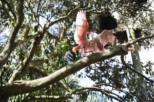 Viajo com Filhos_Belém do Pará com Crianças_Viveiro das Aningas