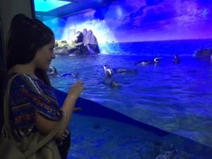 Marina observando os pinguins no Aquário de Ubatuba