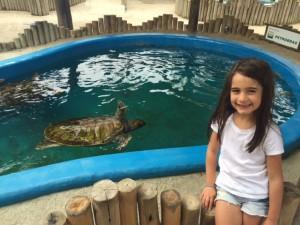 Olivia e as tartarugas