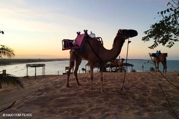 Camelos Genipabu