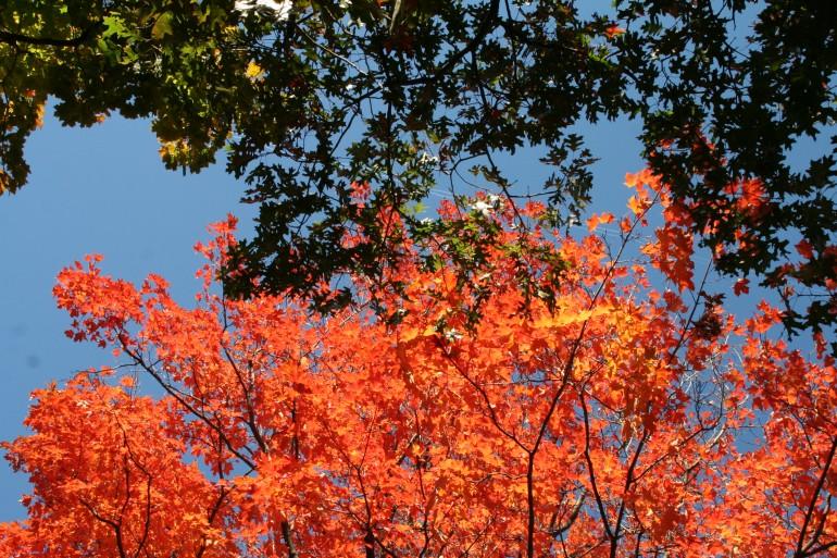 O outono em New England