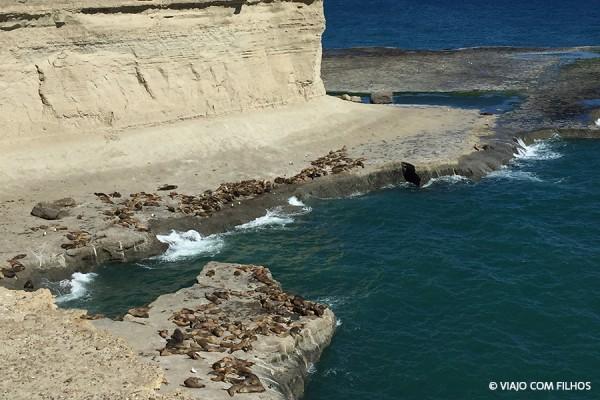 Lobos marinhos - Patagônia