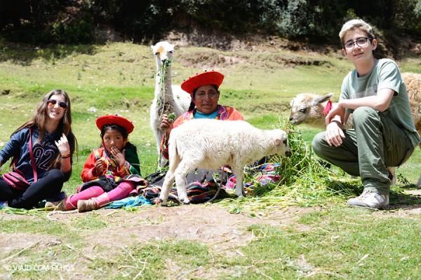 Lhamas - Peru com criancas