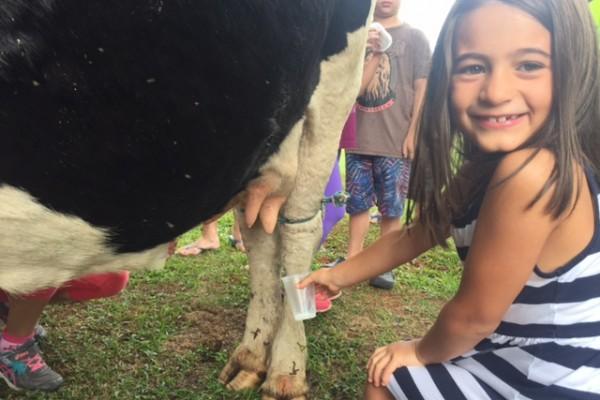 Olivia tirando leite da vaca