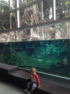 Aquario com criança