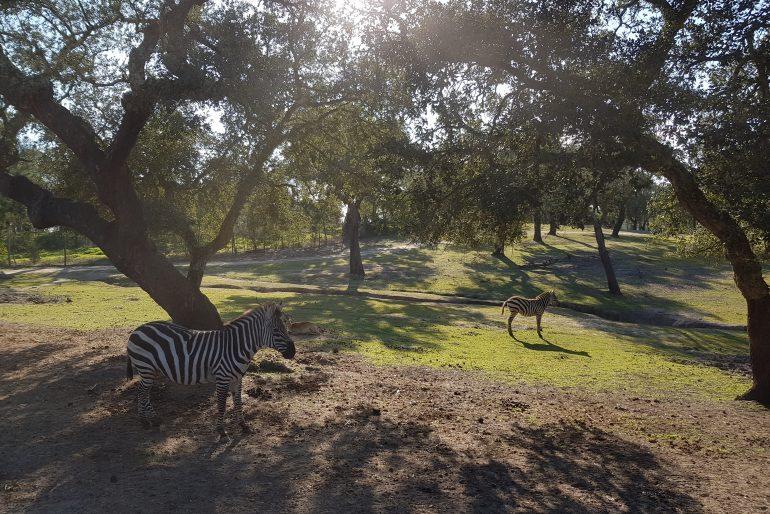 Escapadas desde Lisboa: parque Monte Selvagem, um dia na selva