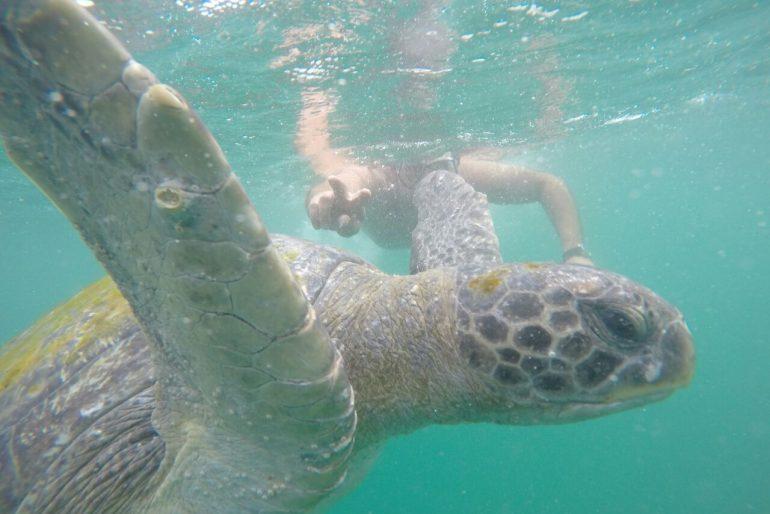 Mergulho com tartarugas no Peru