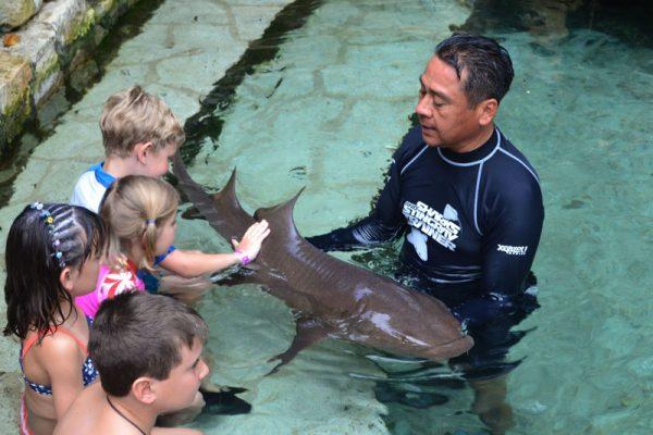 Cancun com Filhos - tubarão