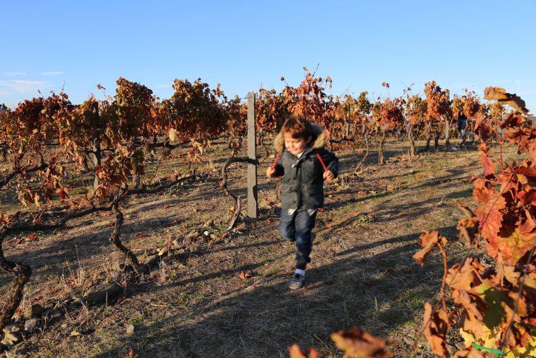Douro com crianças: as estações do ano e as Quintas que visitamos